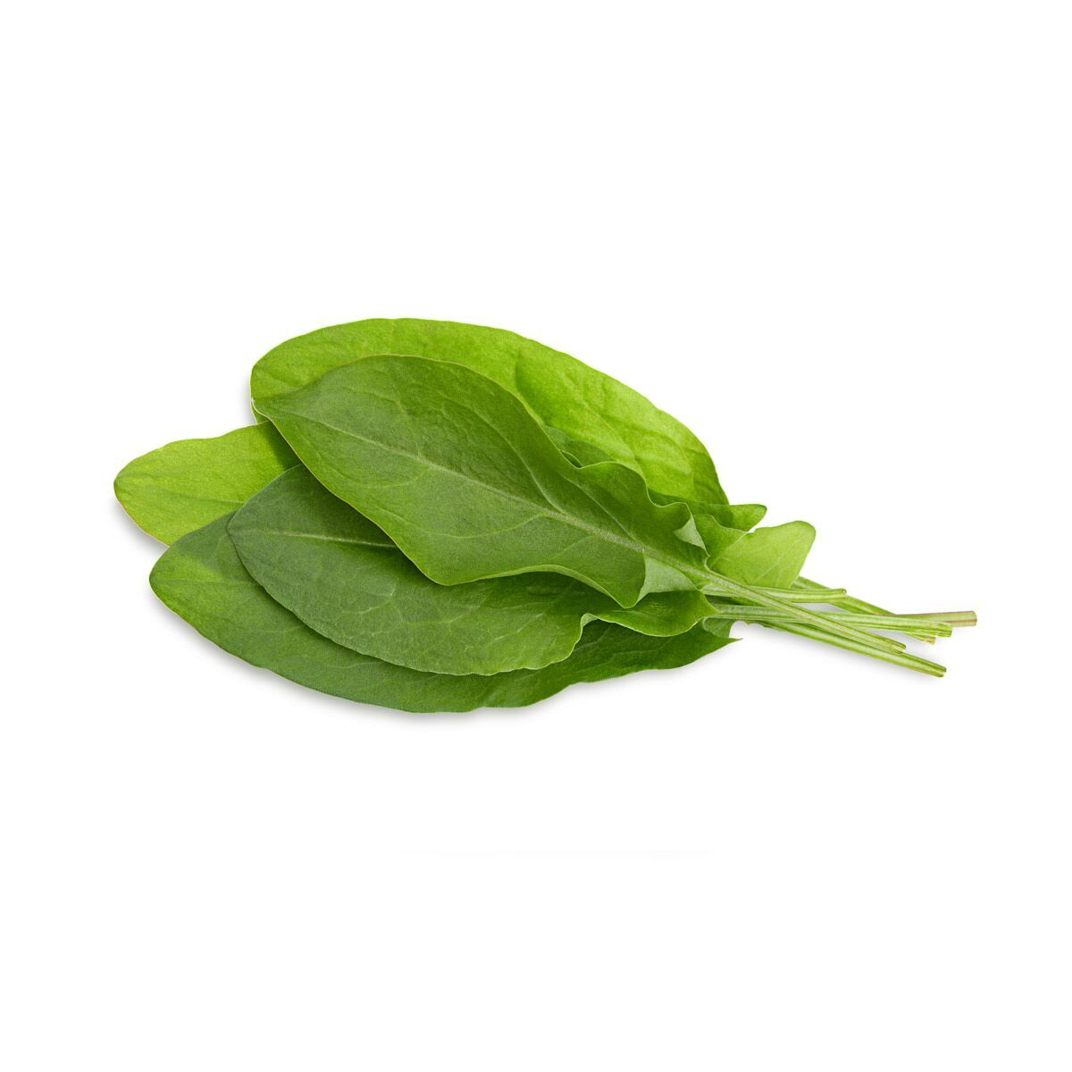 Green_Sorrel_1200x1200_preview.jpg