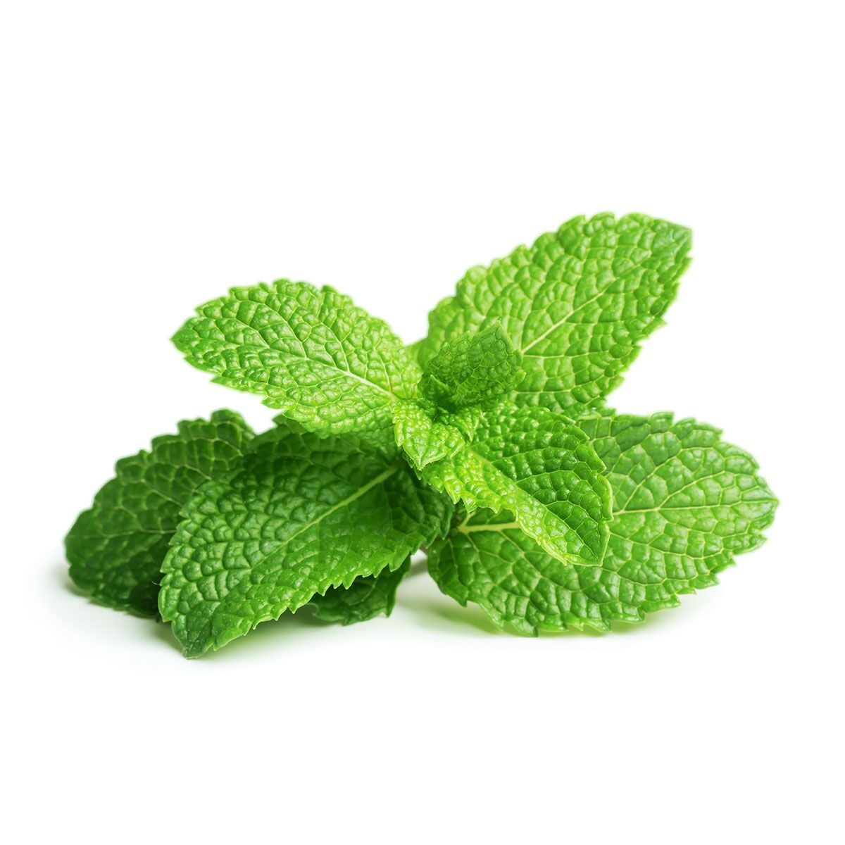 Peppermint_plant_1200x1200_preview.jpg