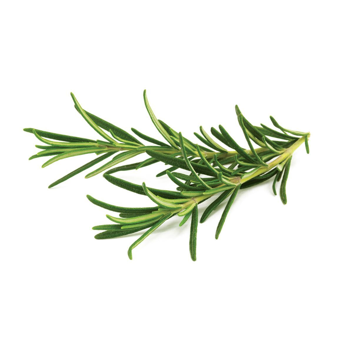 rosemary-1200x1200_preview.jpg
