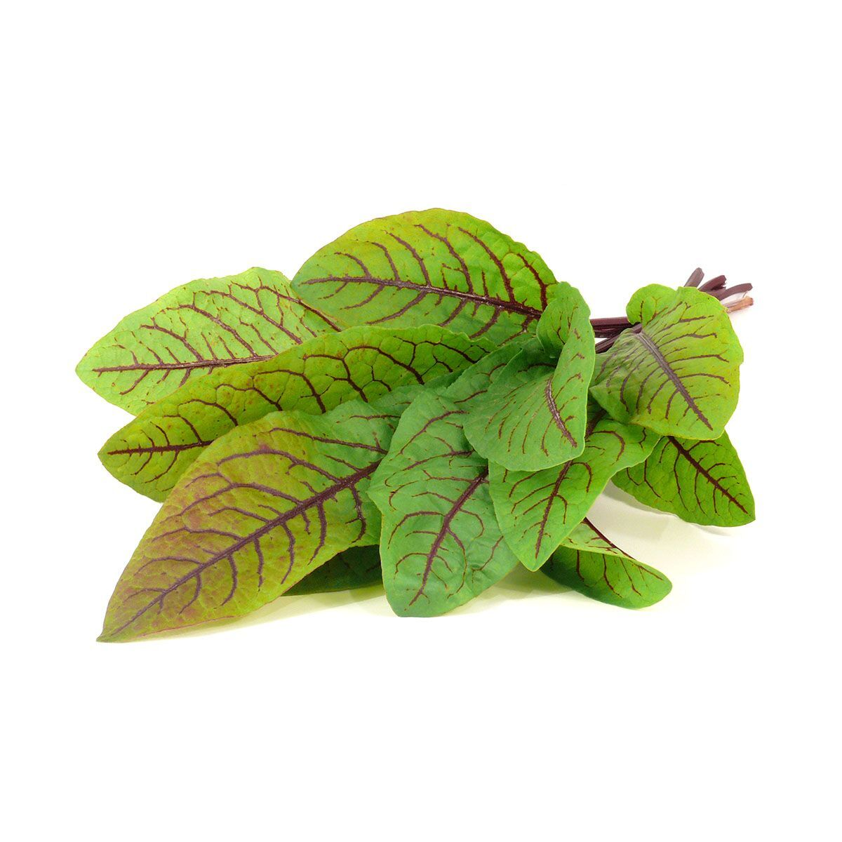 Bloody_Sorrel_plant_1200x1200_preview.jpg