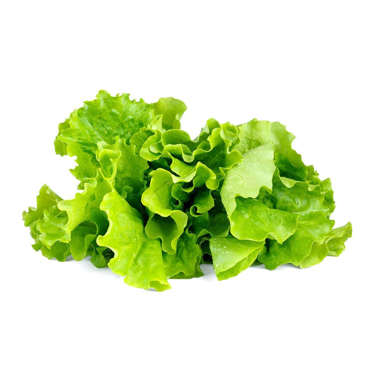 Green_Lettuce_plant_1200x1200_preview.jpg